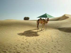Teakwood_Dubai_klein